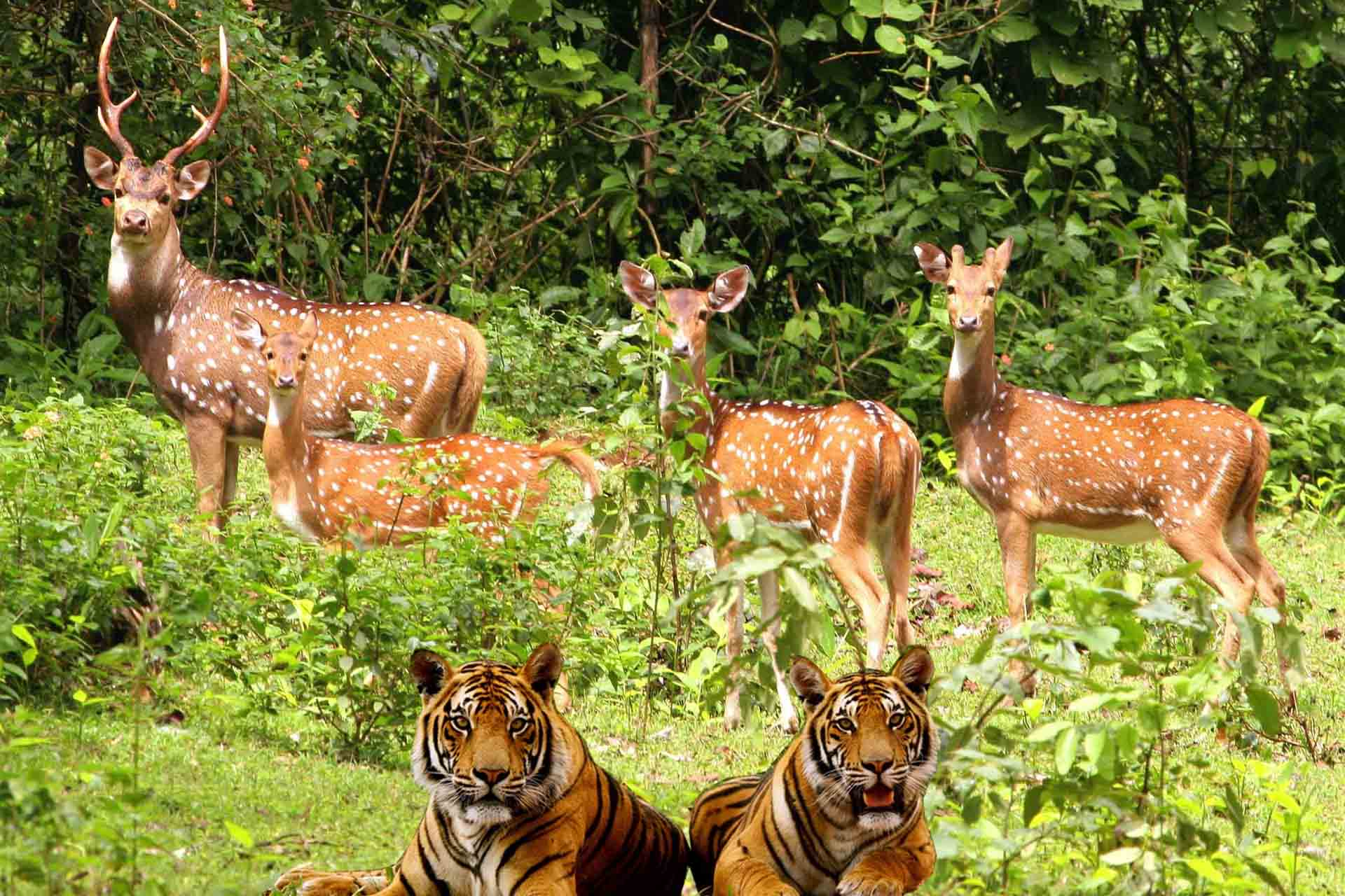 jim corbett national park Jim corbett national park in uttarakhand is the first tiger reserve of india get detailed info on this wildlife safari tours, best time to visit, & how to reach.